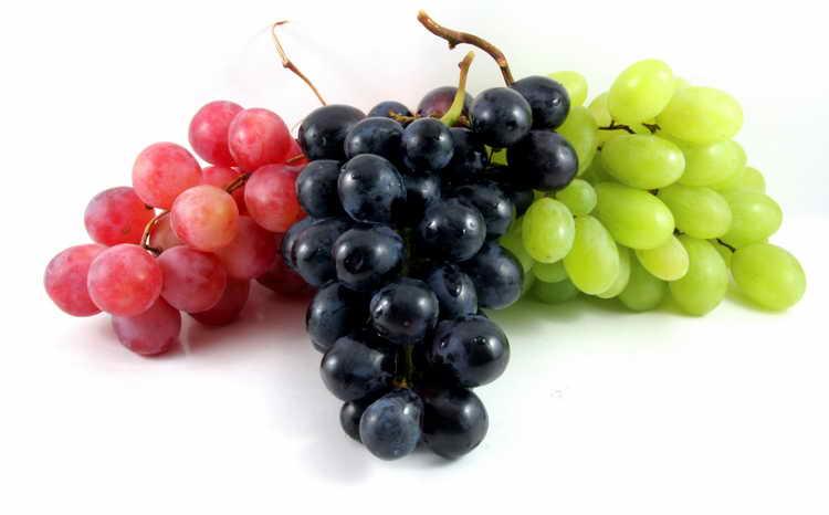 Рецепт браги из винограда для чачи в домашних условиях