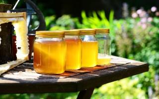 Брага на меду для самогона — секреты приготовления