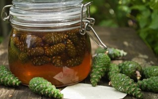 Как приготовить настойку из сосновых шишек в домашних условиях
