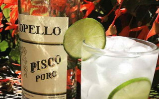 Обзор напитка Писко (Pisco) и его особенности