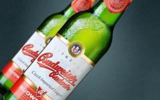 Пиво Budweiser (Будвайзер) — особенности напитка